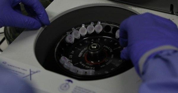 Instituto Butantan pesquisa anticorpos contra covid-19