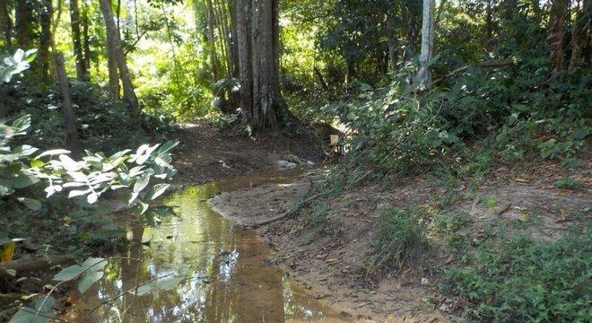 Pesquisadores analisaram peixes em 12 locais nas bacias do rio Guamá e do Acará-Capim, no Pará