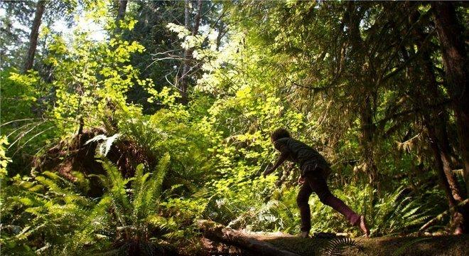 Imersão na floresta traz benefícios surpreendentes