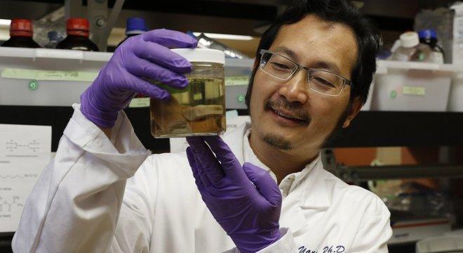 Peter Yang, um dos autores do estudo, exibe amostras de chifres de cervos