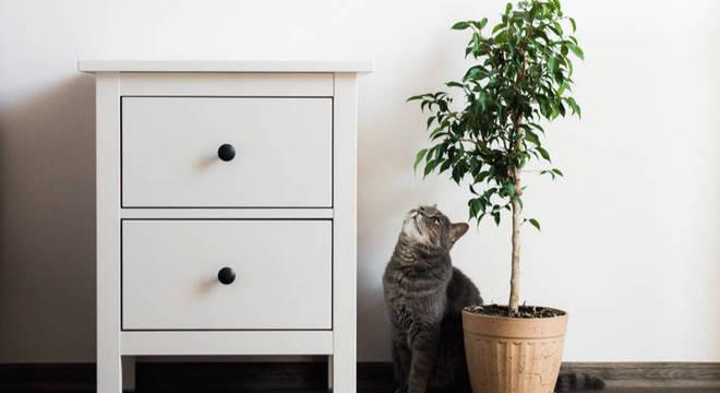 Pets e decoração: saiba como adaptar sua casa para o conforto dos animais