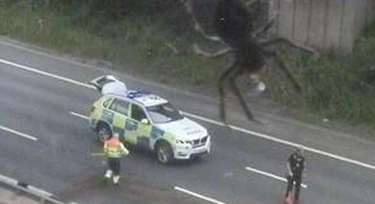 Aranha sobre lente de câmera surpreendeu agentes rodoviários em cena de colisão