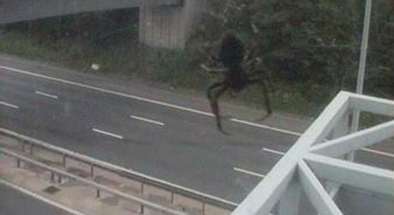 Aranha espaçosa também foi flagrada em pose solitária sobre a rodovia