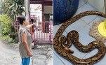 Uma moradora da cidade deSamut Prakan, na Tailândia, levou uma picada de píton na nádega, ao urinar em um vaso sanitário da casa onde vive