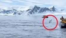 Por um triz: pinguim foge de orcas e se esconde em barco turístico
