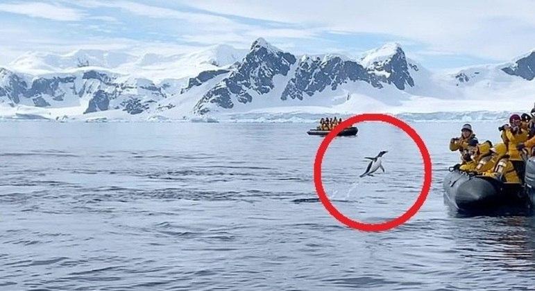 Ave perseguida por orcas deu um salto para liberdade
