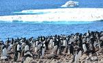 Pinguins aquecimento global