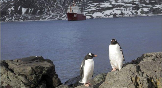 Pinguins são animal símbolo da Antártida 4) Importância científica