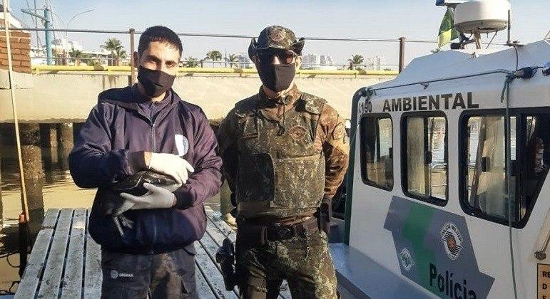 Polícia Militar Ambiental resgata pinguins debilitados em Santos (SP)