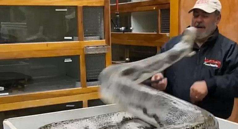 Píton arisca tentou por duas vezes abocanhar o tratador de répteis Jay Brewer