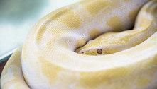 Cobra de 1,60m surge em vaso sanitário e ataca homem na Áustria