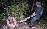 A espécie considerada invasora foi descoberta na região há duas décadas. Especialistas acreditam que as serpentes se estabeleceram a partir de animais de estimação que fugiram ou foram soltos