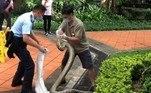 De acordo com especialistas da iniciativaHong Kong Snake ID, a espécie pode chegar até 8 m de comprimento e pesar até 80 kgVeja também:Fazendeiro encontra cabra de estimação sendo devorada por píton