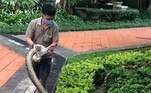 Especialistas consultados pelo site de notícias Coconuts Hong Kong acreditam que se tratasse de uma píton birmanesa, comumno sudeste e sudoeste asiáticoBombou no HORA 7!'Monstrinho' encontrado em bosque choca a web enquanto se alimenta