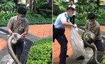 Uma enorme píton foi capturada no jardim de um complexo residencial em Hong Kong, na China