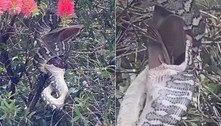 Píton devora morcego em árvore e encanta moradora: 'Foi incrível'