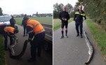 Um píton com aproximadamente 4 m de comprimento foi encontrada morta em uma pista de corrida da cidade deEtten-Leur, na Holanda