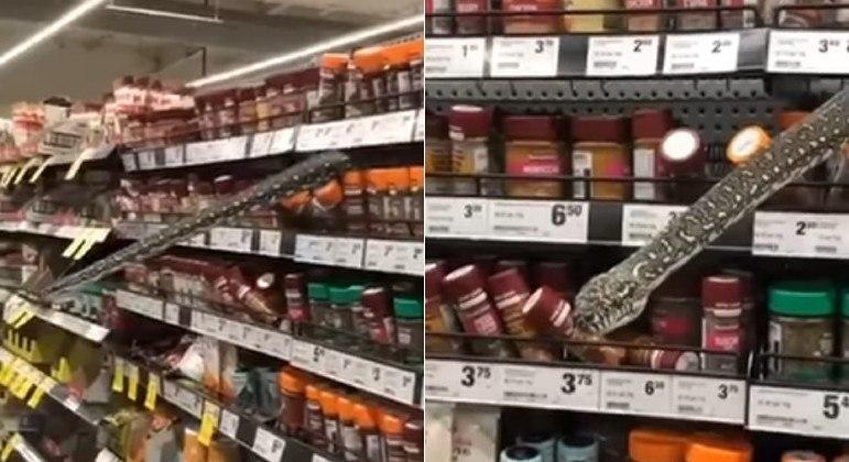 Uma píton foi flagrada sobre a prateleira de um supermercado de Sidney, na Austrália