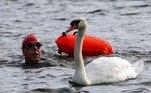 Nadador é flagrado próximo a cisne durante oThe 2021 Children with Cancer UK Swim Serpentine, maior eventoevento de natação em águas abertas do Reino Unido, que tem por objetivo arrecadar fundos para a pesquisa sobre a prevenção e o tratamento do câncer infantil