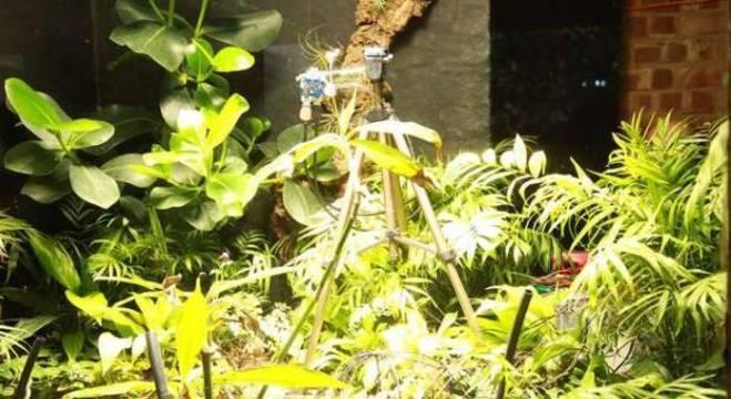 Dispositivo utiliza energia da fotossíntese da planta para tirar fotos
