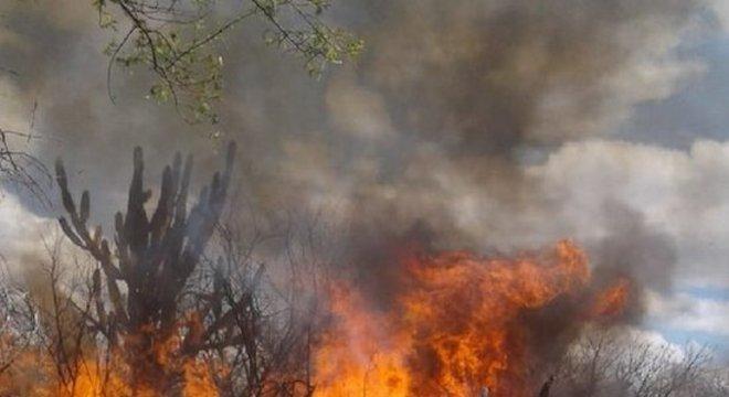 Polícia Federal Operação da Polícia Federal em Pernambuco queimou milhares de plantas
