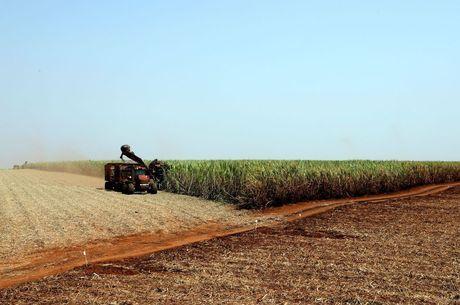 Soja representa um terço da produção brasileira