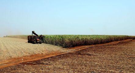 Brasil tem 83,4 milhões de hectares plantados