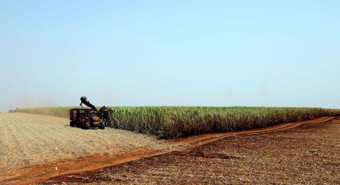 Projeção aposta em colheita 1,7% maior do que a do ano passado