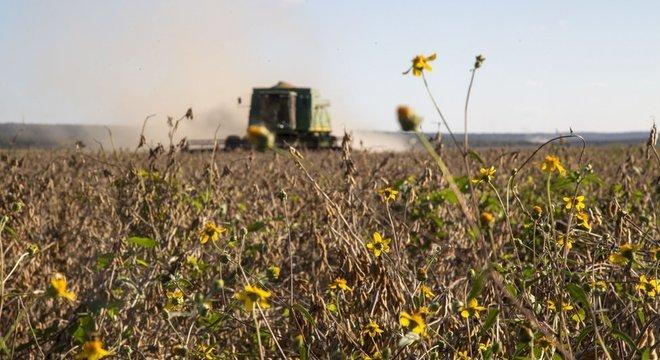 Plantações geneticamente modificadas consomem mais agrotóxicos em geral