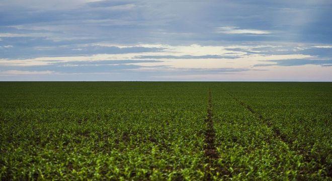 Plantação de soja recebe tratamento com agrotóxicos