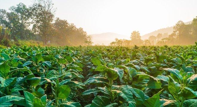 Descoberta pode ajudar a monitorar grau de hidratação de plantações, dizem cientistas