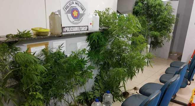 Homem é preso após a PM encontrar plantação de maconha em casa