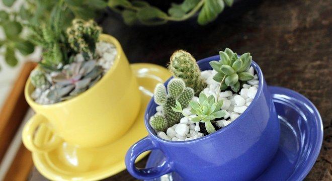 Espaço não é problema para quem deseja conviver com plantas em casa.