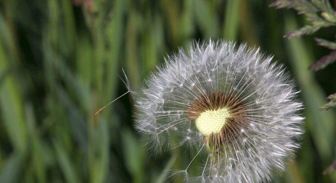 plantas alimentícias não-convencionais