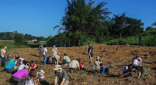Campanha plantará ao menos 200 mil árvores ao longo de seis meses