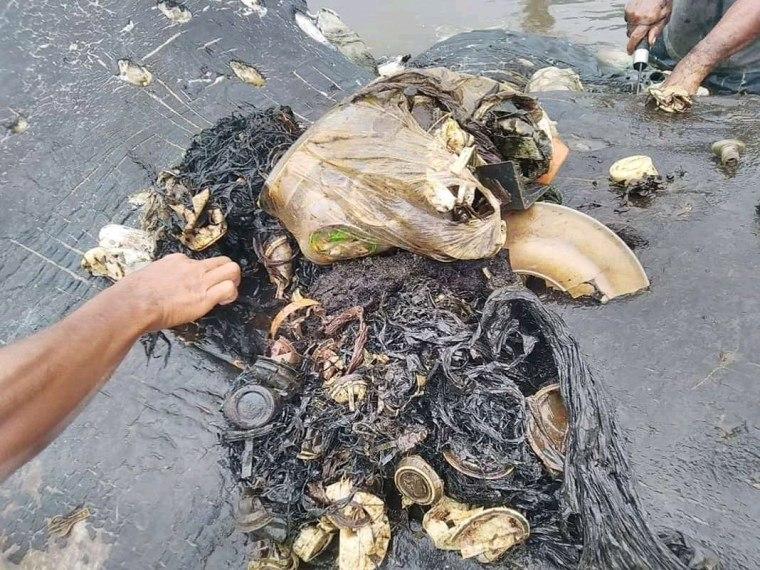 Baleia é achada morta na Indonésia com o estômago cheio de plástico