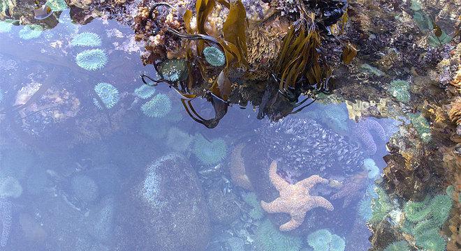 As poças de maré estavam cheias de vida... e de estrelas do mar