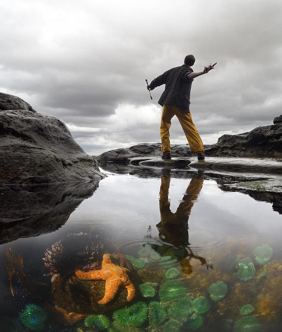 As poças de maré foram um laboratório natural para Robert Paine