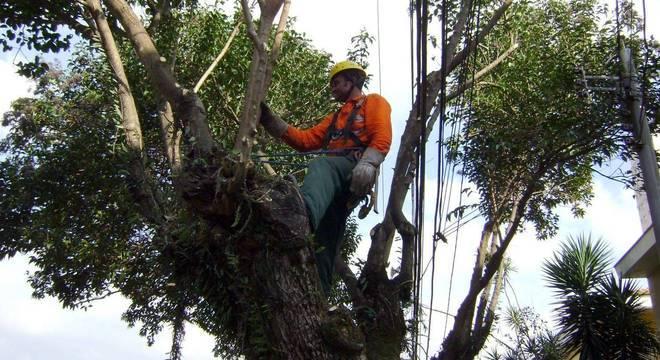 Reclamações sobre poda e manejo de árvores liderou reclamações em 2018