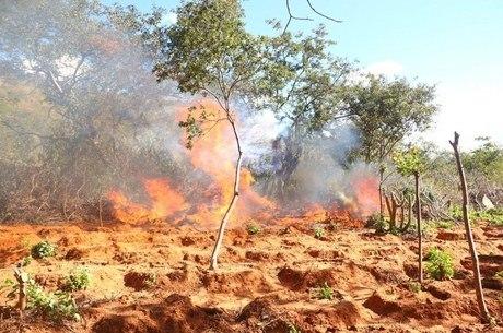 Ação incinerou cerca de 180 toneladas da droga