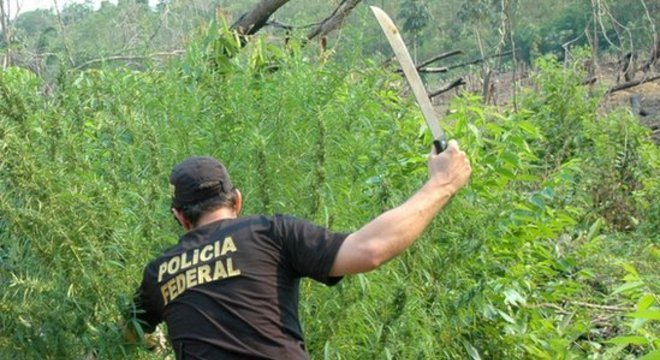 Policial federal cortando pés de maconha em local não especificado