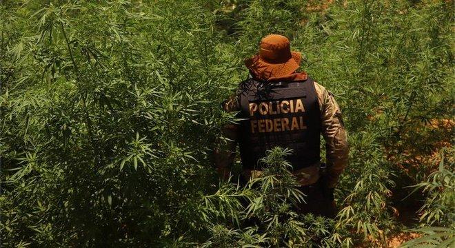 A postura restritiva do governo Bolsonaro é oposta a diversos países, que já liberaram o uso medicial e recreativo da cannabis