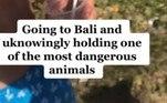 Kaylin fez a viagem no início de 2020 e só recentemente descobriu como esteve próxima da morte. Ela publicou no TikTok no domingo (21) a descoberta chocanteLEIA MAIS:Mulher encontra aranha gigantesca no banheiro e fica sem ação