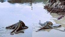 Polvo gigante surge em praia e não assusta: 'Dia normal na Austrália'