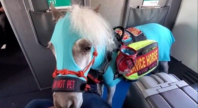 Vestindo uma roupa especial, Fred fez suas primeiras viagens de avião