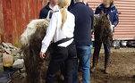 """""""Quando os socorristas apareceram, eles se depararam com um homem que havia sido chamado pelo proprietário para ir buscar o corpo dela"""", disseWendy Suddes, da Here 4 Horses Equine Charity, ONG que acolheu o animal, ao Bored Panda. """"Se ele achava que ela já estava morta, é irrelevante, porque ela estava sujeita a um sofrimento terrível"""