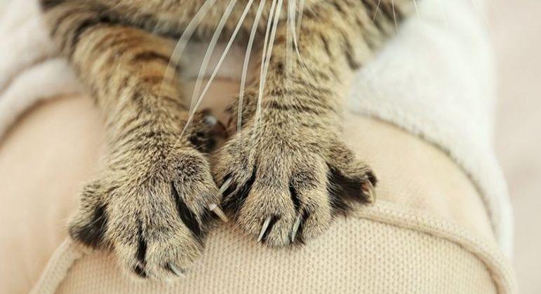 Por que gatos amassam? Entenda essa mania dos felinos