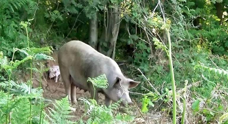Animal escolheu matagal de fazer para dar à luz