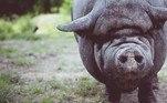 E daí voltamos para a questão: porcos são capazes de desaparecer inteiramente com um corpo?NÃO PERCA:Casa avaliada em R$ 3,6 milhões reúne decoração bizarra por dentro