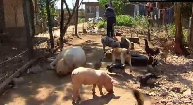 Além de João, vários outros animais vivem na casa de Rosângela